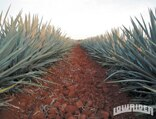 lrmp_0905_03_pl-1954_chevy_bel_air-agave_farm